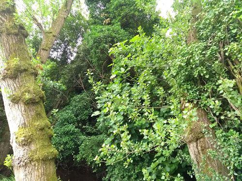 Cuadro para la categoría Forestales